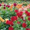 Сам себе дизайнер. Цветы и огород в саду