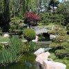 Голландский регулярный стиль сада: подбор растений