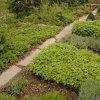 Выращивание лекарственных растений: аптекарский огород
