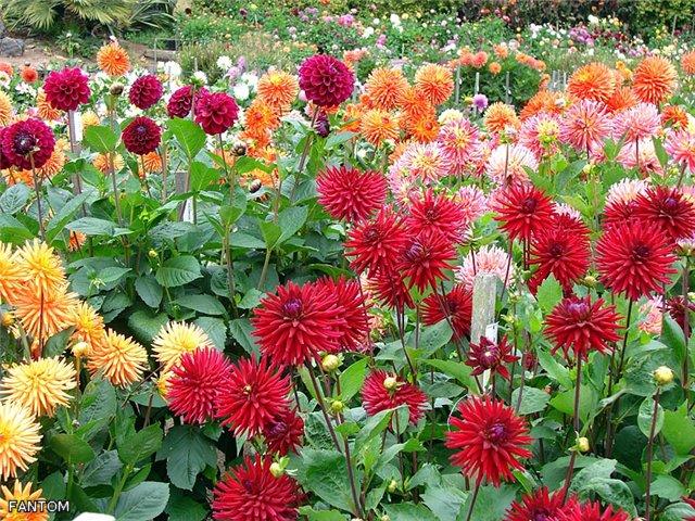 Себе дизайнер цветы и огород в саду